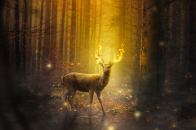 Fire, deer, fantasy, art
