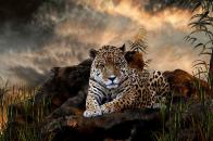 Jaguar HD Wallpaper