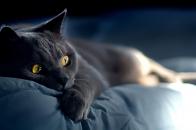 Black Cat Sleeping on Matras