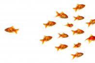 Goldfish Background Image 1920x1080