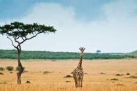 Mini Giraffe Wallpaper 1280x1024