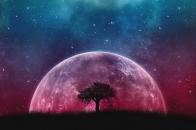 Tree, planet, stars, galaxy, art