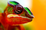 Chameleon 1680 X 1050
