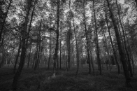 Forest, black, and, white