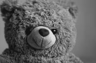 Teddy, bear