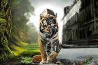 Tiger 4K Wallpaper