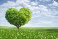 Love, tree